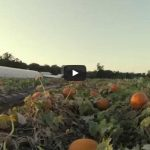 Pumpkin Patch Fly By Yoders Farm