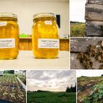 July 26th End of Spring Season Preparing for Fall Yoders Farm (Medium)