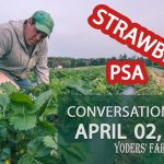 Strawberry Season PSA - Protecting Blossoms from Frost - Conversations #011