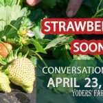 Twice the Strawberry Frost Protection – Getting Closer to Opening the PYO Patch – Conversations #012