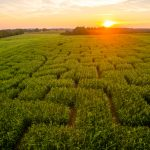 The 2016 Fall Corn Maze